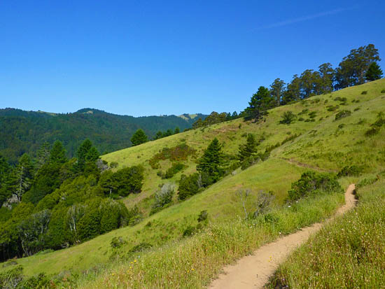 Singletrack across open coastal hills on the Dipsea Trail